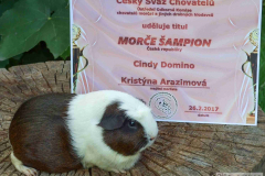 Cindy_sampion_diplom
