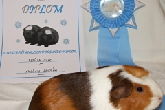 Merilyn_diplom3