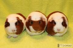 3_trio