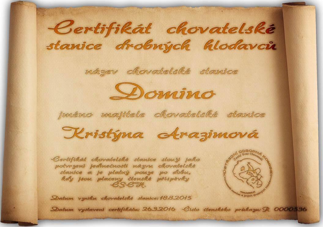certifikat ChsDomino